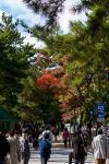 Day 11 - Nara streets